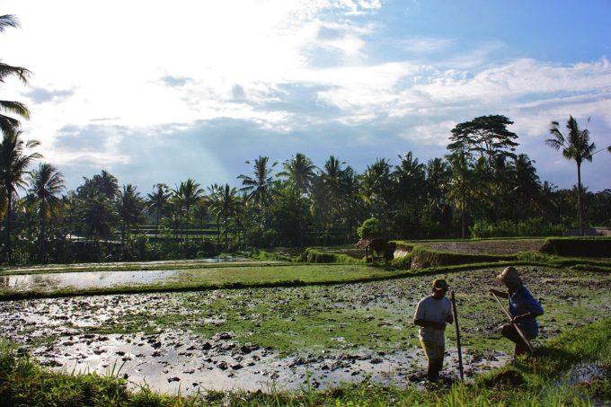バリ島 雨季と乾季